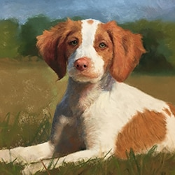 Pets fine art portraits